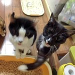 仲間にアッパー食らわす猫w高速すぎて殴られてる方ブレブレなんですが!