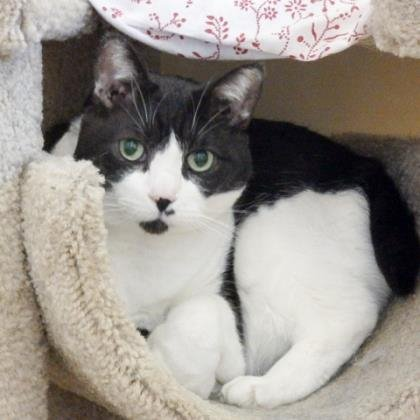 Meet today's PetOfTheDay: Eric Cartman!