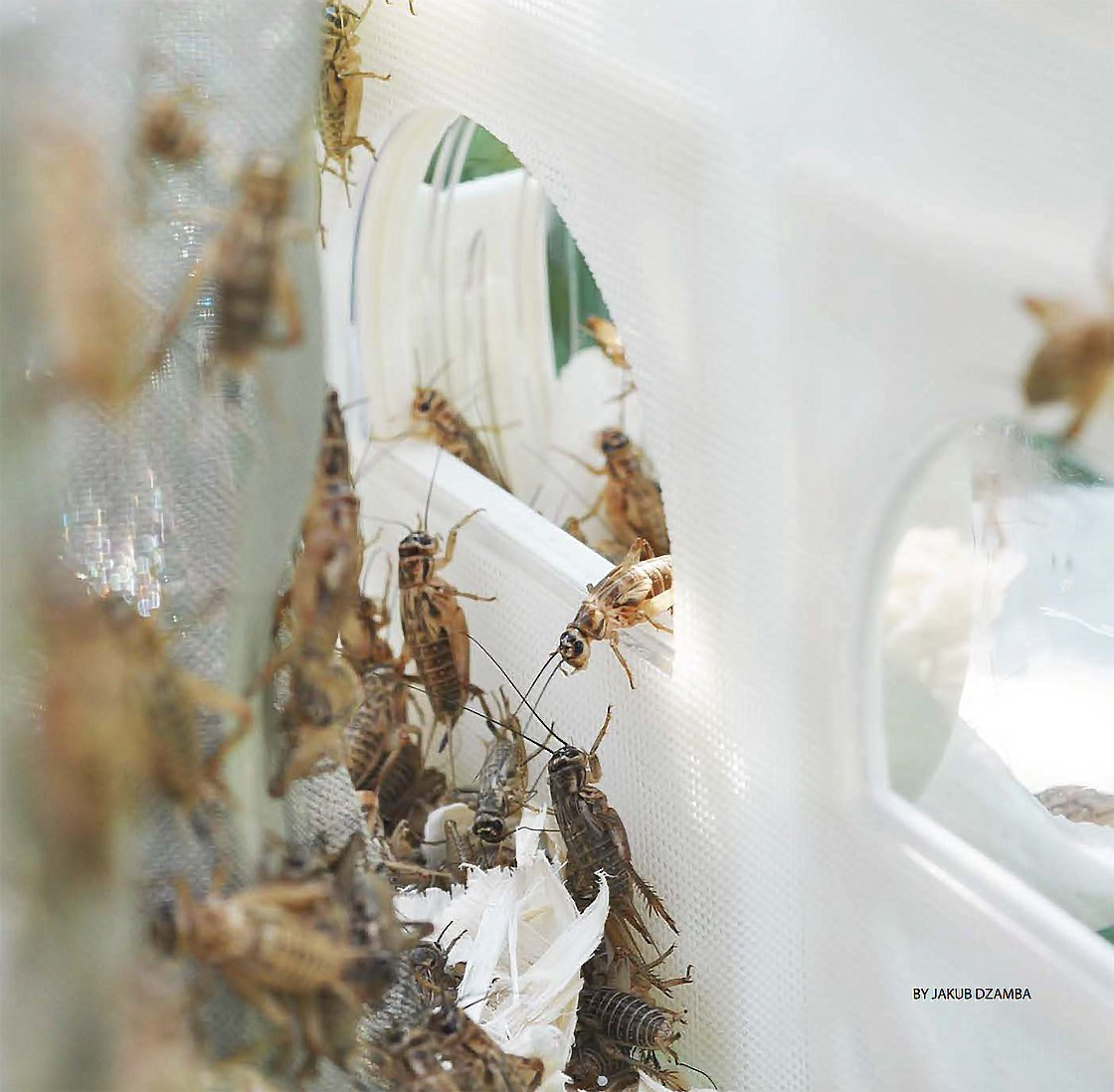 #BUGSfeed is marking World Edible Insect Day #WEID by looking at an insect city utopia: @kub_ohh's cricket reactors https://t.co/7jelIDJIQY https://t.co/ntHKNCrGzU