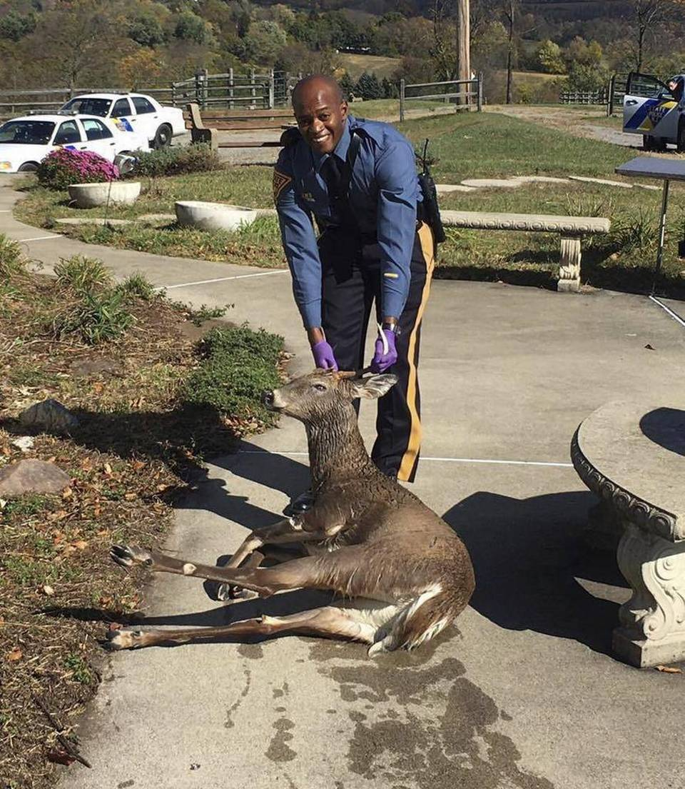 Drowning, exhausted deer pulled from swimming pool by N.J. state trooper