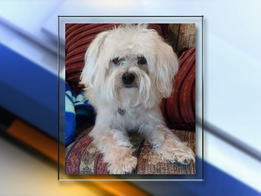 Family says beloved Yorkie-poo was killed with a pellet gun at Colorado home