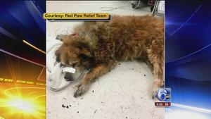 Heroic dog saves owner from house fire in Port Richmond