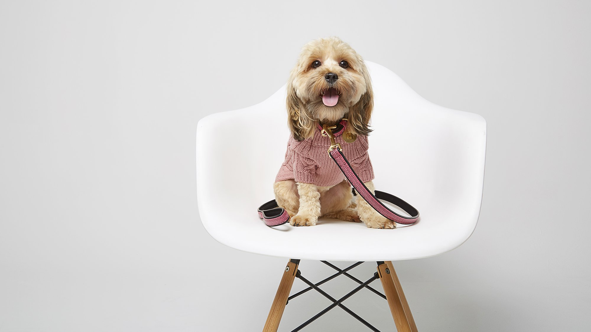 Stop everything. @riverisland now does clothes for dogs and we want it all https://t.co/bRwzqT30TU https://t.co/PSJLuwDgRM