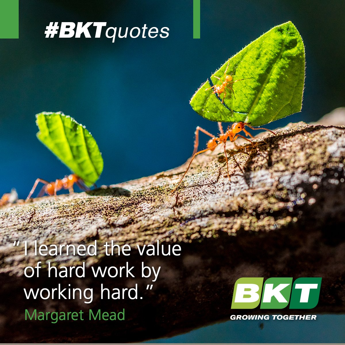 We learn the great value of hard #work every day. #BKTquote #quote #quoteoftheday https://t.co/TMgMjIwTfJ