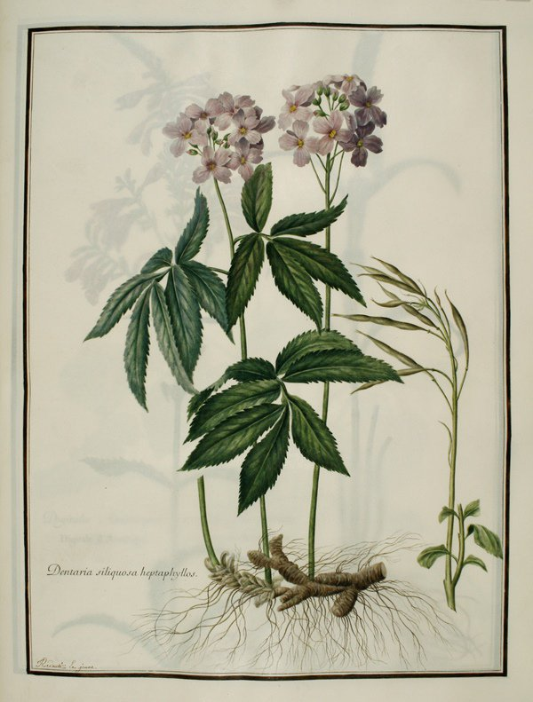 Beni castro benicastrogz twitter for Biblioteca digital real jardin botanico