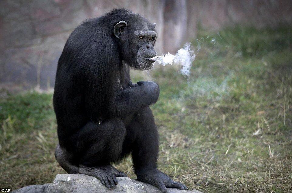来月はちんげ05です! さて、前回になかったお客様に向けての注意事項です。機材にVAPEの煙を吹き掛けないでください。故障の原因になります。 おたくにかけるのはフリーなのでそちらでお願い致します。 #ちんげ05 https://t.co/17czavBQvC
