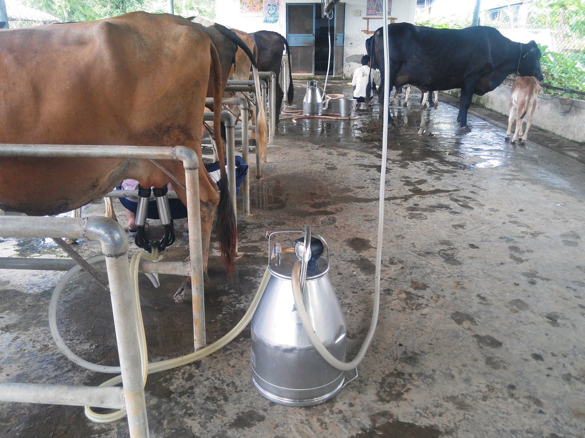India Dairy Farming On Twitter Farm In