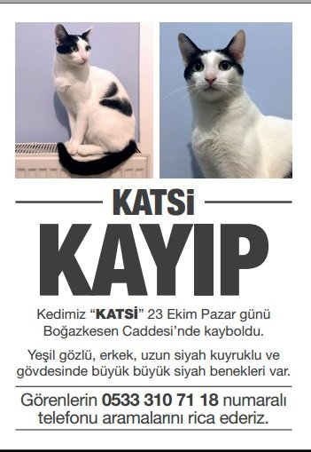 Kayıp kedi Katsi aranıyor. Beyoğlu civarlarında belki görebilirsiniz https://t.co/mSX8qLlrN5