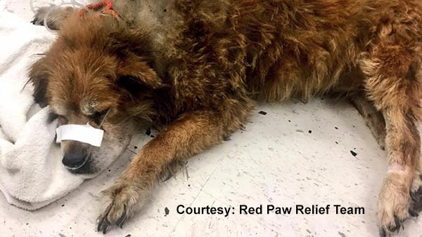 Heroic dog saved owner from house fire in Pennsylvania, neighbors say
