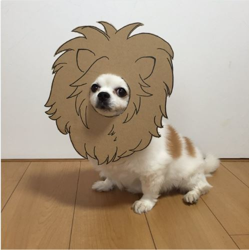 This dog in a cardboard costume is the cutest thing you'll see all day