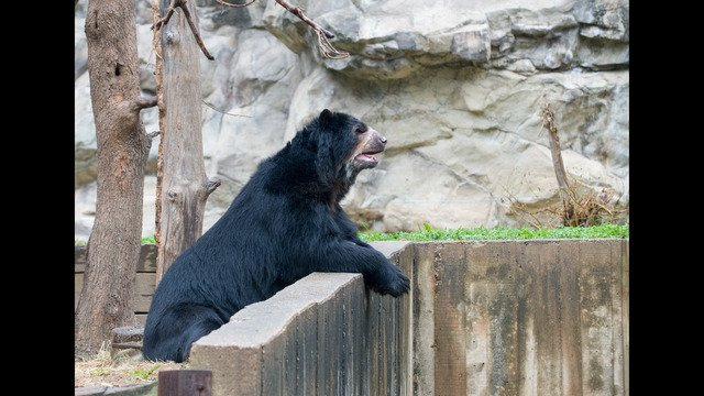 National Zoo's Andean bear dies at 23-years-old