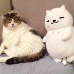 これは似すぎWW猫の表情、ポーズまで一緒なんてすご過ぎWW