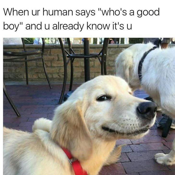 It\'s me. I\'m the good boy!