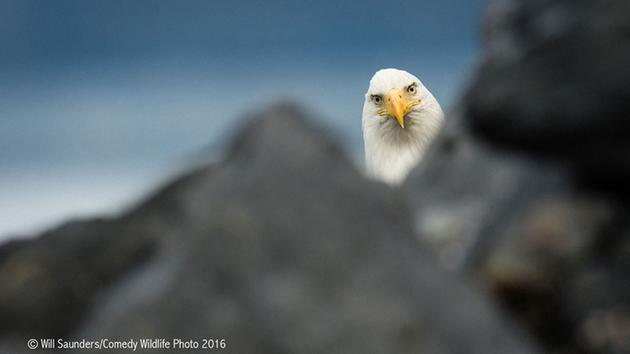 Too funny! Here's a look at the finalists for the 2016 Comedy Wildlife Photo Awards