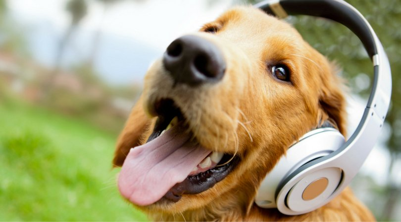 You\'ll Never Guess What Type Of Music Dogs Love The Most
