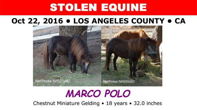 Miniature horse stolen from its Malibu home, and his disabled owner needs help to find him