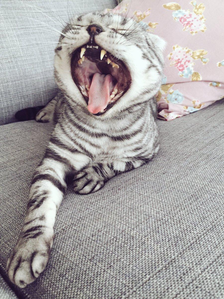 家にちっさい猫型怪獣いた!おはようございます。#猫 #cat #ビス pic.twitter.com/j0WT6w4zbY