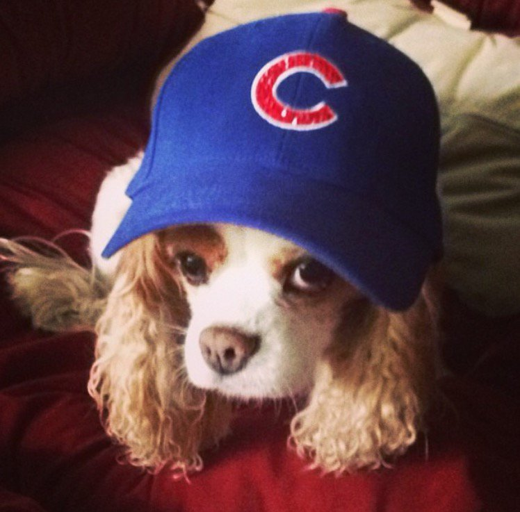 These pups want to FlyTheW! More photos of the Cubs' furriest fans: FlyTheW