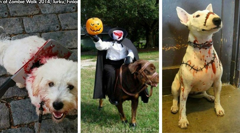 13 Truly Terrifying Pet Costumes