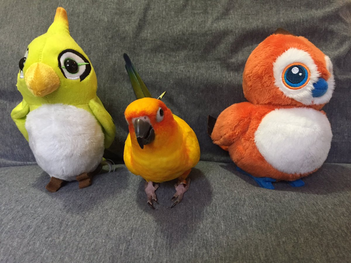 Pepper And Pals Magfest On Twitter She S A Sun Conure