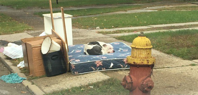 Dog left behind after family moves out, waits for owners to return for a month.