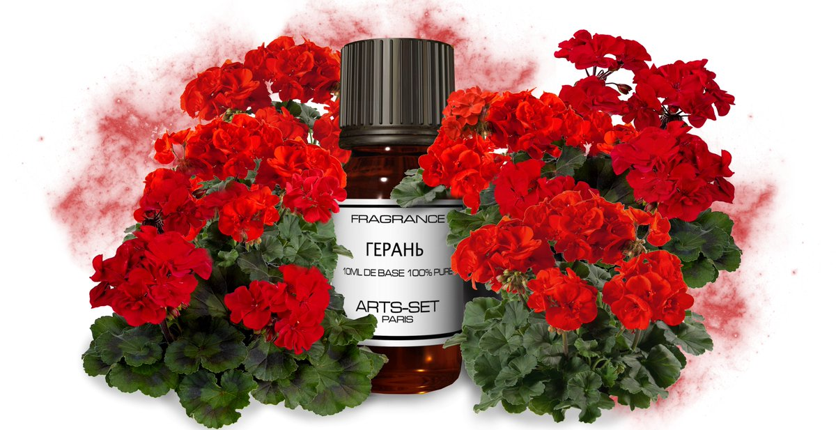 Герань, или как ее еще называют, пеларгония и журавельник, самый распространенный и неприхотливый домашний цветок.