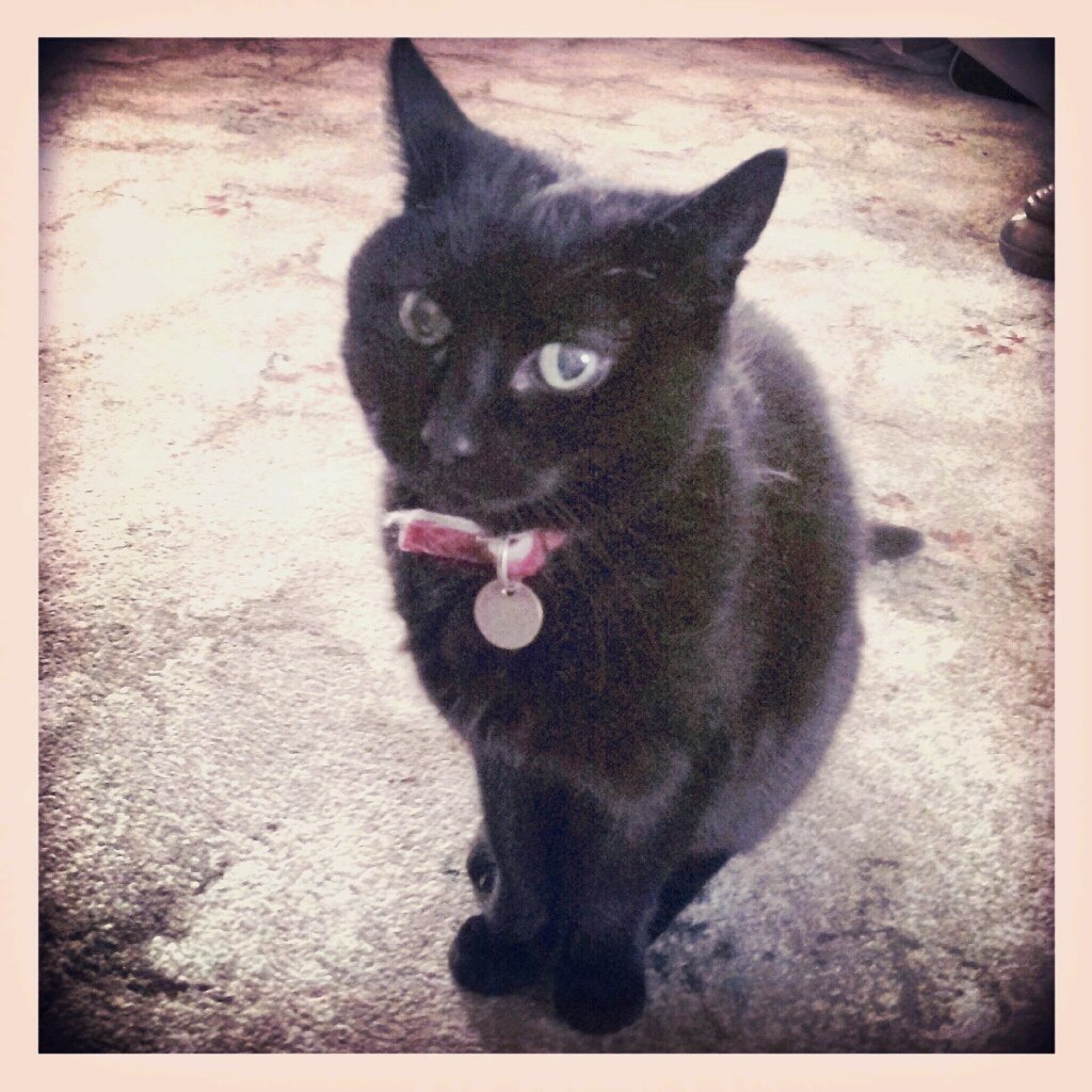 In Scotland, a black cat turning up at your house means prosperity is on the way! #BlackCatDay #folklorethursday https://t.co/Jn6W1r53Kq