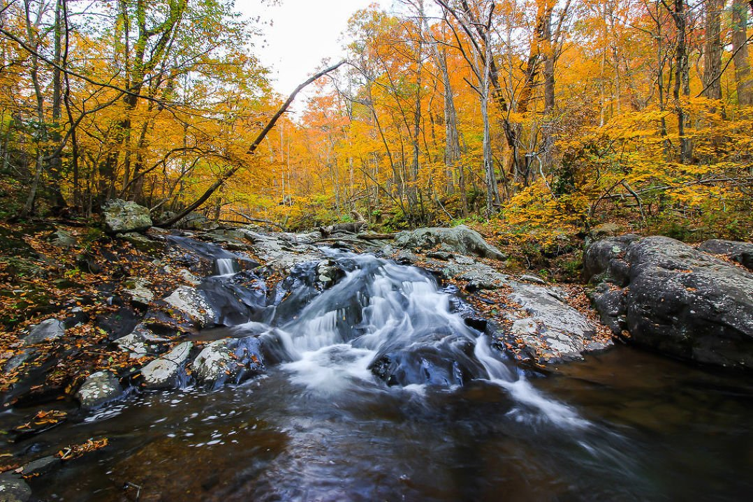 Keep sending your fall foliage pics to This is from Ryan Thompson from @ShenandoahNPS