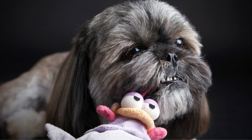 4 Slightly Disturbing Reasons Why Your Dog Loves Squeaky Toys