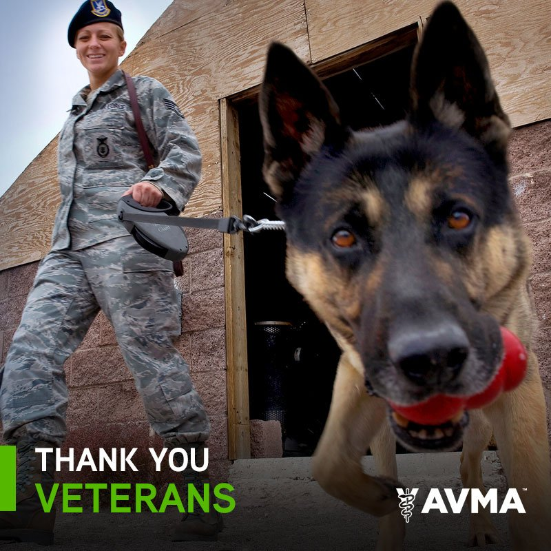 Thank you to all those  who have served, whether on two legs or on four. #VeteransDay https://t.co/dEM7MPmZbl