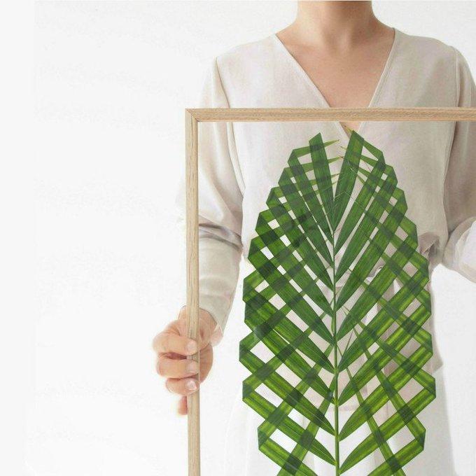 Cmo hacer un cuadro con plantas naturales ideas DIY