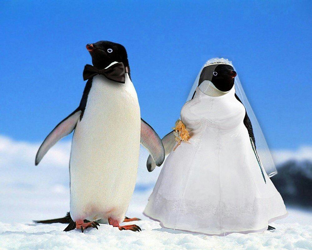 они картинки с пингвинами я тебя люблю способ позволяет