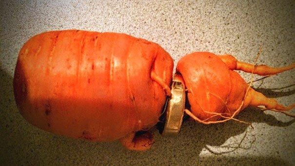ドイツの82歳の男性、3年前に庭で結婚指輪をなくしてしまったけど、掘ったニンジンが指輪に刺さった状態で成長していたことで発見。奥さんはきっと見つかると信じていたそうです。