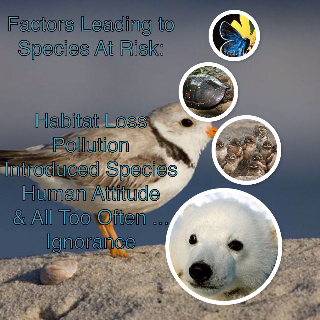 """Thumbnail for Twitter Chat on #EnviroEd """"Species at Risk"""" 11/09/16"""
