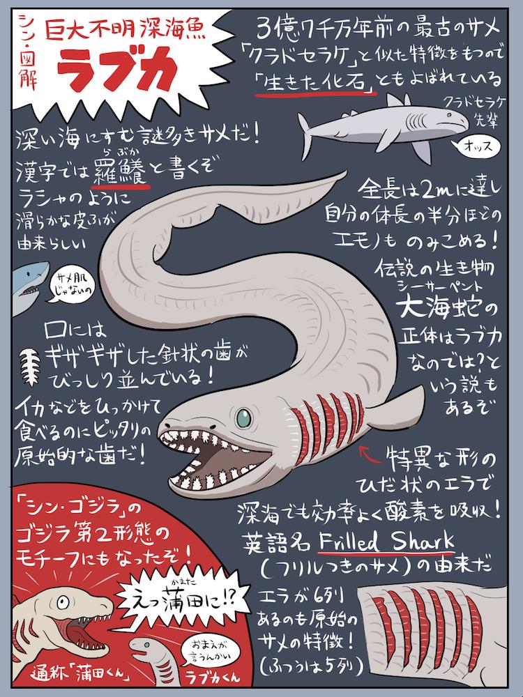 わりと巨大でかなり不明な深海生物「ラブカ」の図解です。世界的にも珍しいサメですが意外と日本はラブカ大国! 魚ファンや怪獣ファン以外の人もラブカを好きになってくれると幸いです。なお映画『シン・ゴジラ』のネタバレが含まれるので未見の方はご注意を…(さすがにもう大丈夫な気もするけど)。