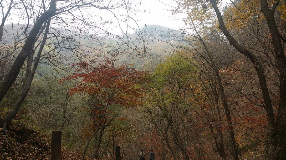 가을이 깊어가네요~^^ https://t.co/1Ah5jmkYID
