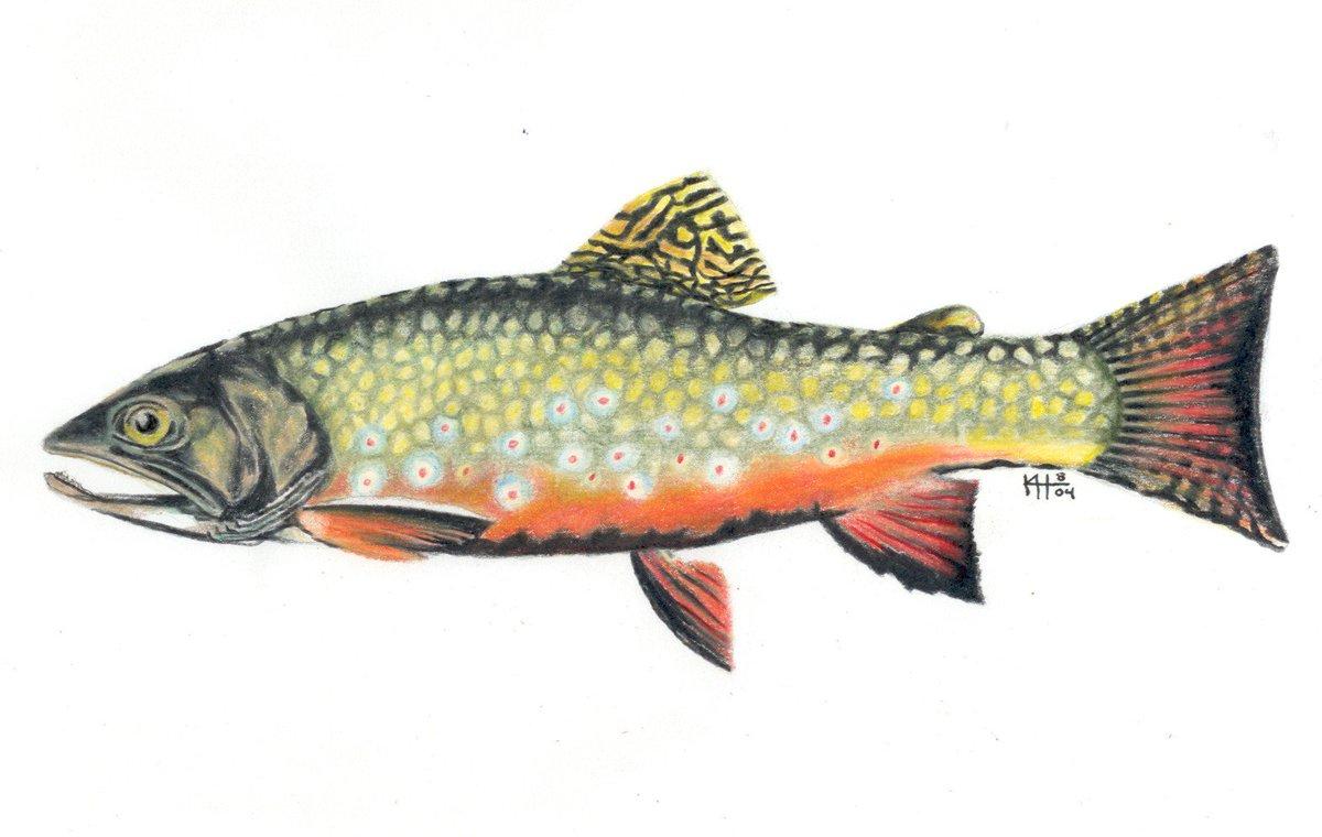 Matt weiser matt weiser twitter for Pa fish stocking