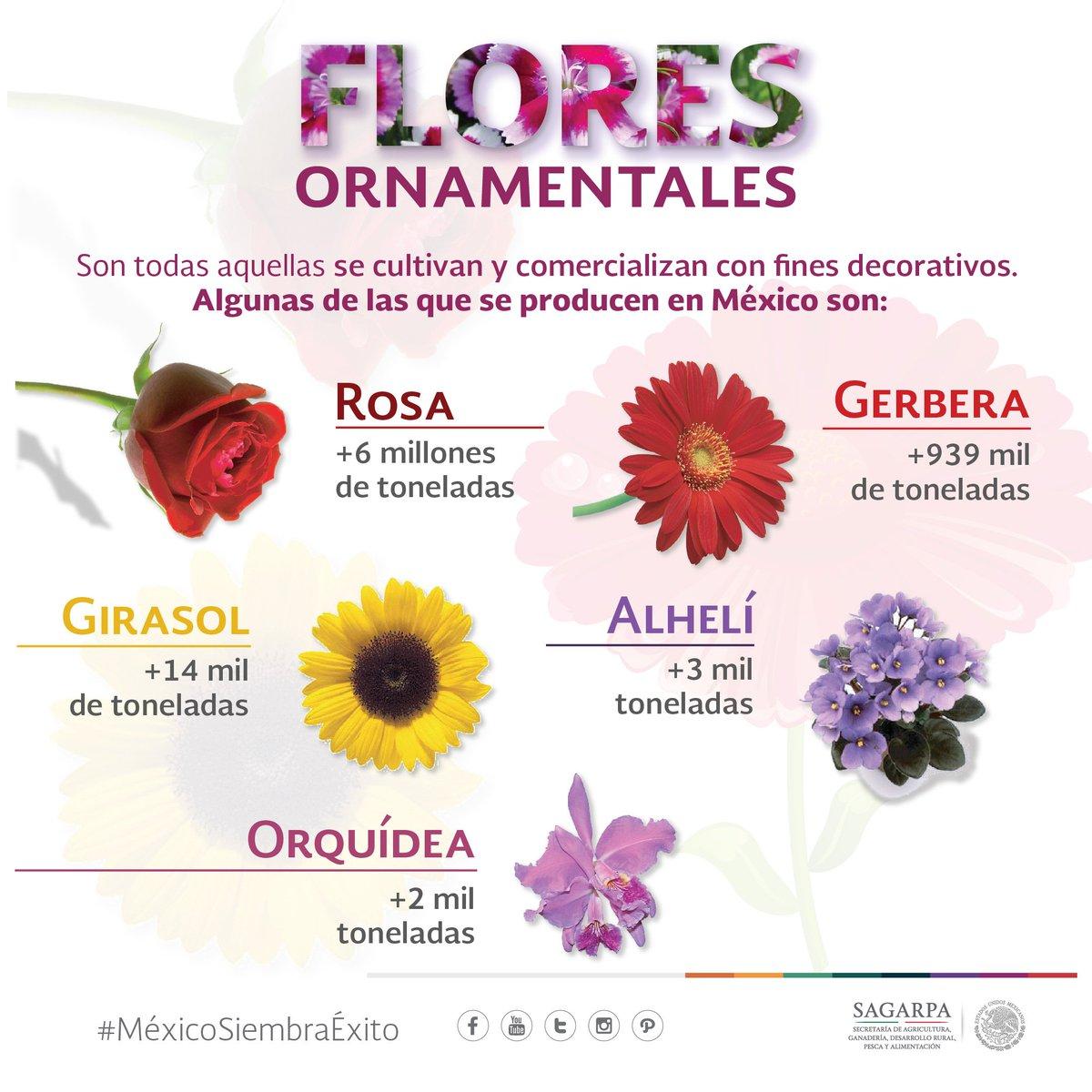 Sagarpa m xico twitter en m xico gozamos de una gran for 10 plantas ornamentales