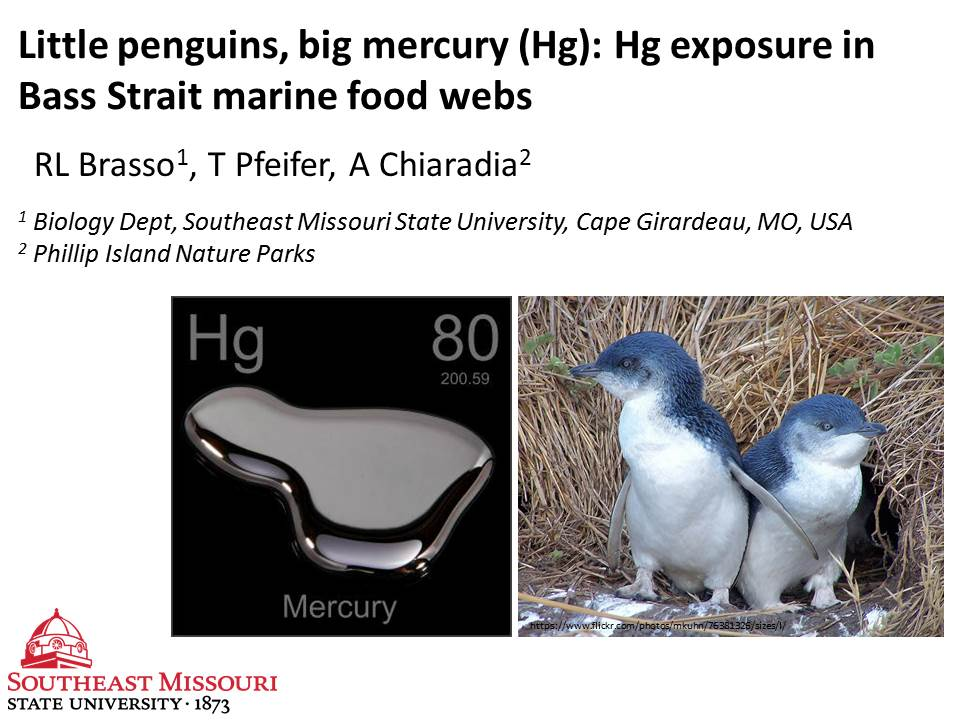 1/6 #PISCI1 Mercury (Hg) in Little #penguins from St. Kilda exceeds adverse effects level for #seabirds, show sig. inter-annual variation https://t.co/LFia0UwfRa