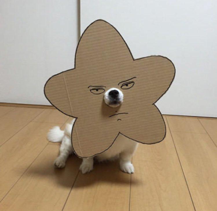 Dog in cardboard cutout