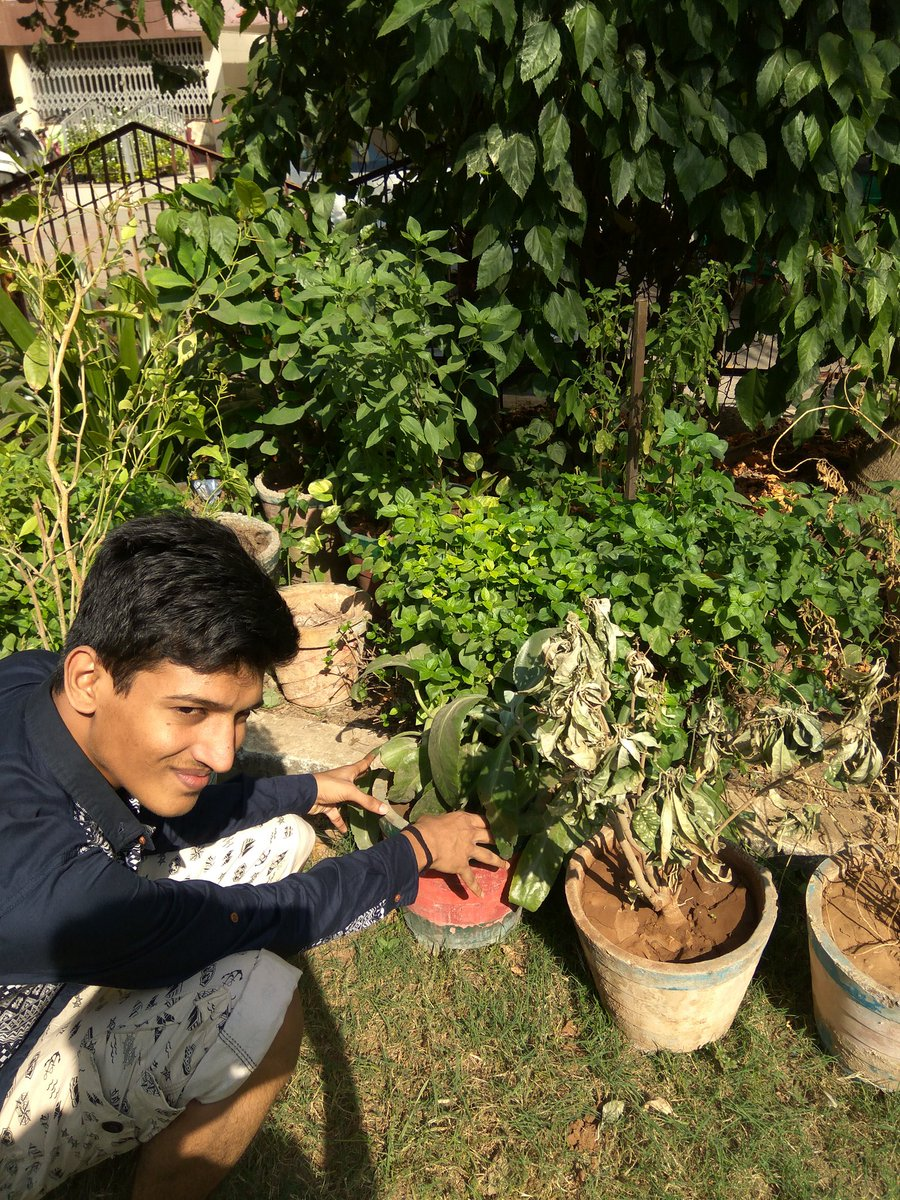 @IntexBrand Tree planting is a #DiwaliWithADifference Best way to celebrate diwali and save my Planet