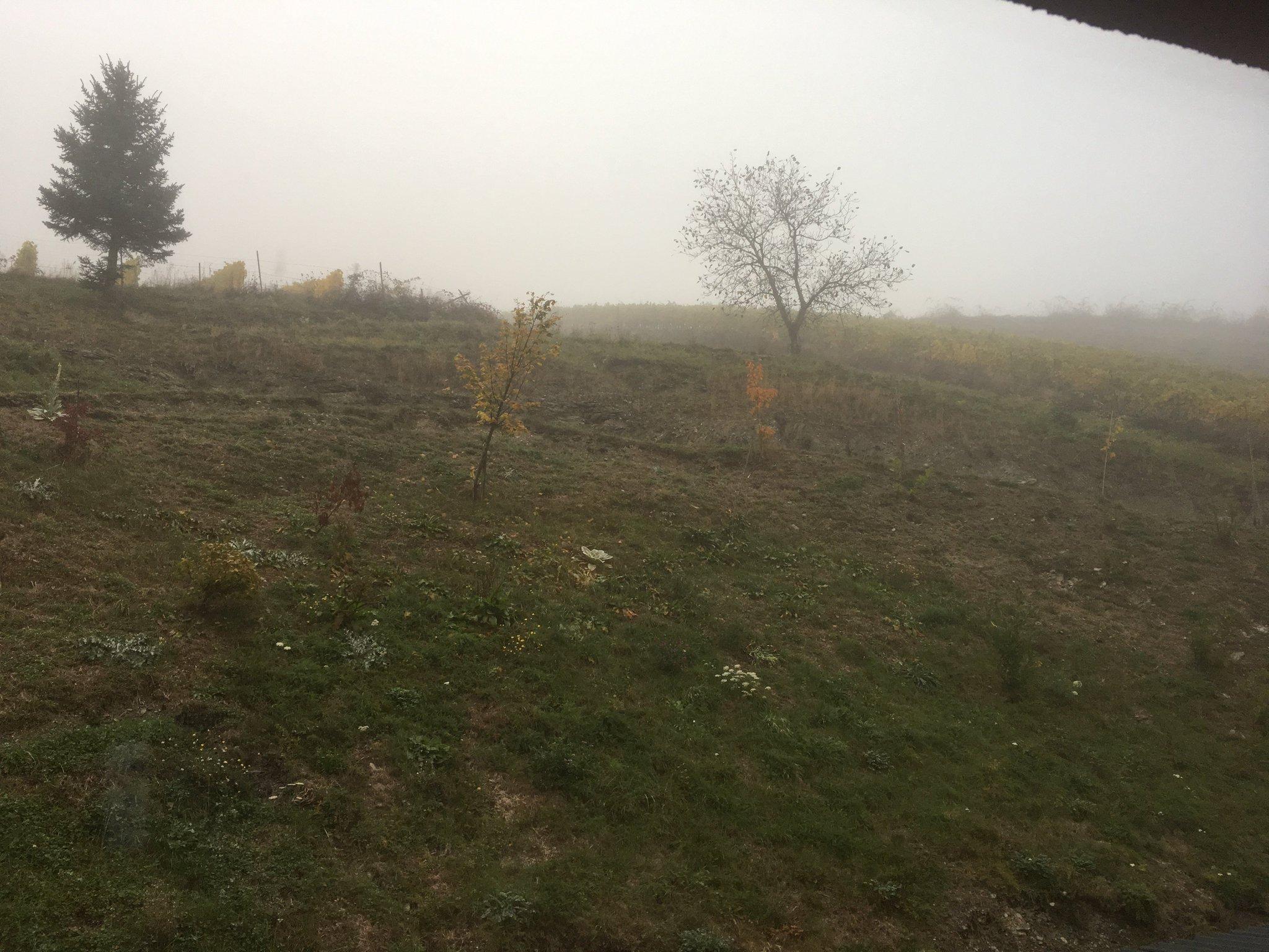Guten Morgen aus dem Weinbergschlösschen. Noch ist es etwas neblig #meurers #weinbs https://t.co/NjJdtn091x