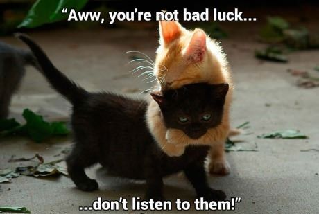 Black cats deserve to be adopted too. Help dispel the 'bad luck' myth. @Incensewoman will agree. Happy #Halloween