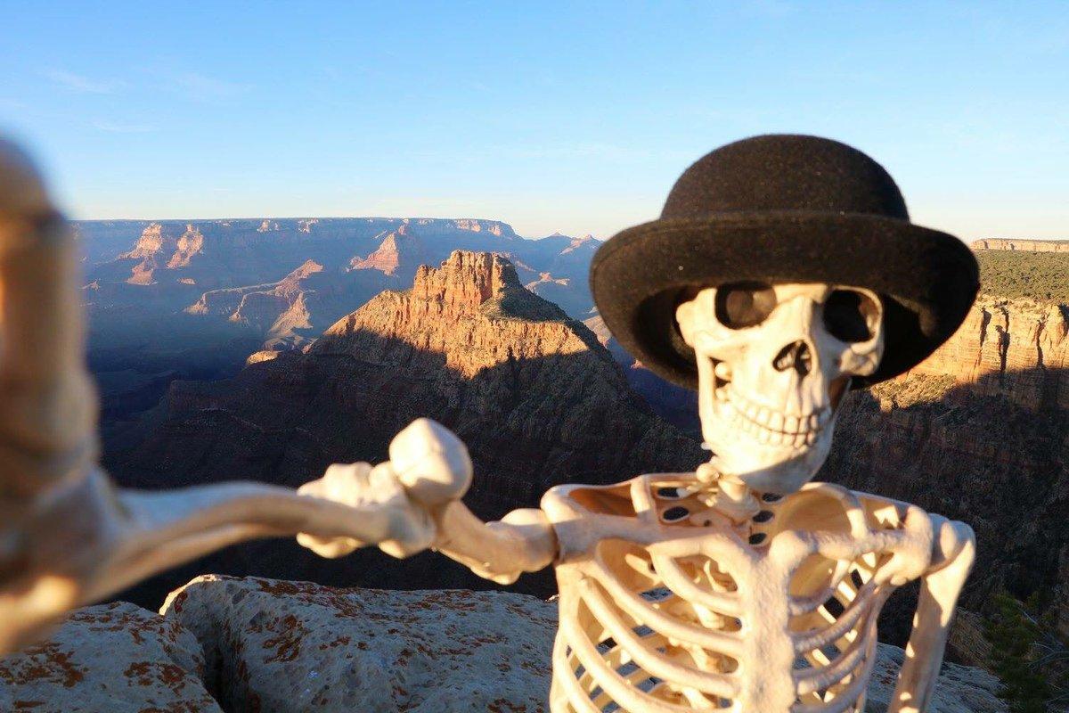 мужчин скелеты на отдыхе картинки макро-линза хороша ней