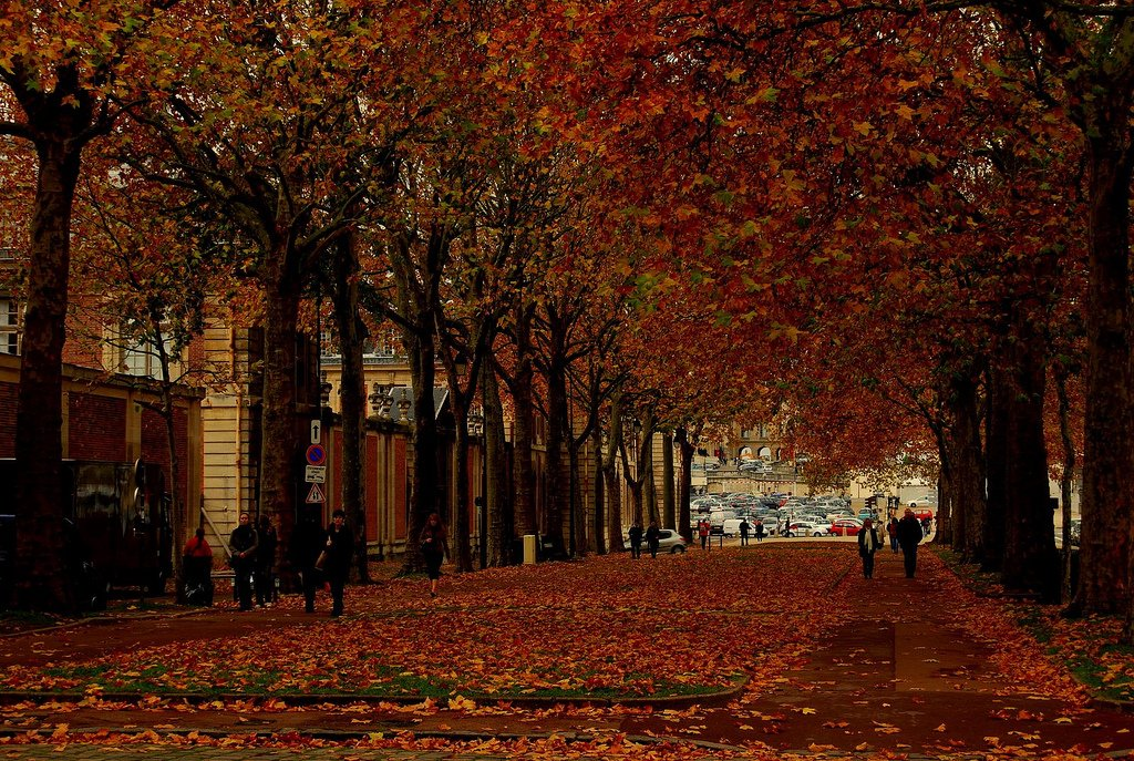 France Fr On Twitter Nothing Better Than A Reflective Sunday Afternoon Strolling Through Paris In Autumn Https T Co Sc8t9z4dzq