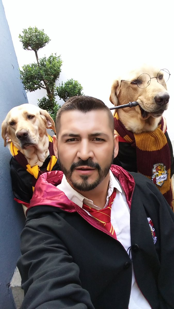 This dog dropped the mic on all other 'Harry Potter' costumes