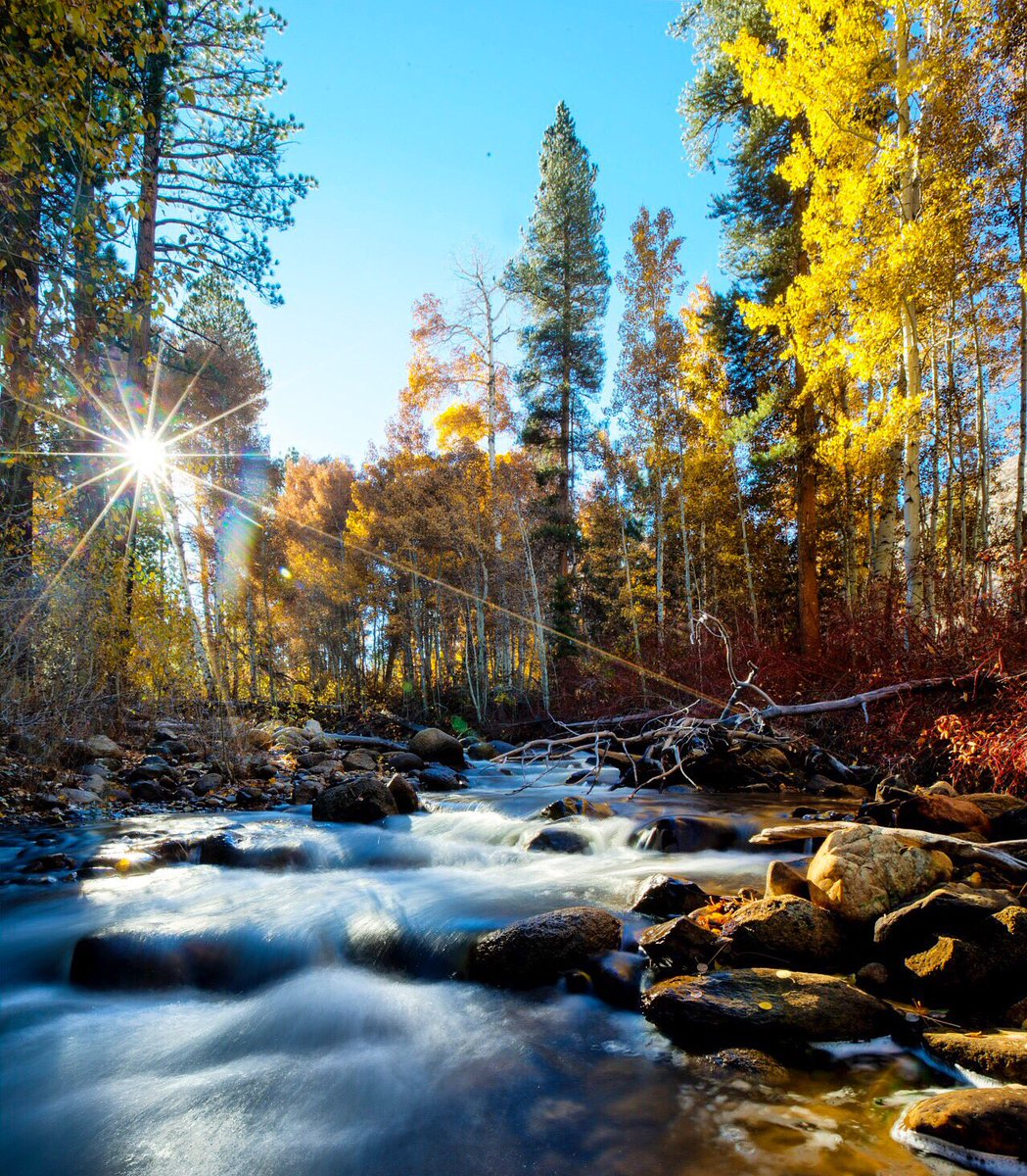 Yellow leaves & rushing water make #fall come alive at Green Creek in #California's famed Eastern Sierra