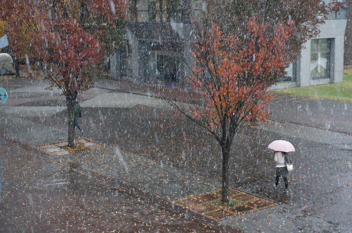 岩手県立大学(滝沢キャンパス)に今年初めて雪が降りました!シンボルツリーの周りも真っ白です。 学生の皆さん、気をつけて登下校しましょう。 https://t.co/9ql53I6rN5