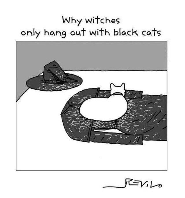 Plan accordingly, fellow kittehs. #Halloween https://t.co/GsJcKePVf9