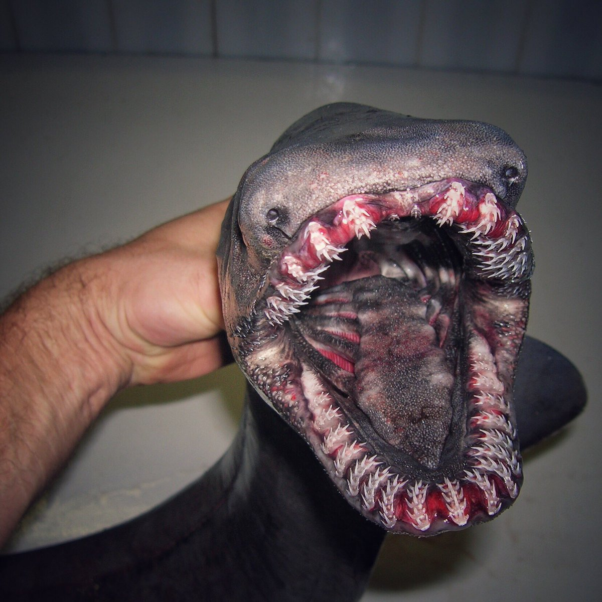 Don't hate on deep-sea critters. They've got to be weird to survive.